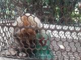 Центр сохранения биоразнообразия Биен-Хта получил Лориса
