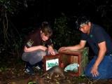 53 Панголина спасены во Вьетнаме