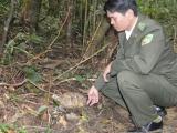 Редкую черепаху выпустили в национальном парке «Bạch Mã»
