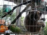 Два редких вида животных были найдены во Вьетнаме