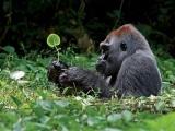 Во Вьетнаме разработали план борьбы с истреблением приматов